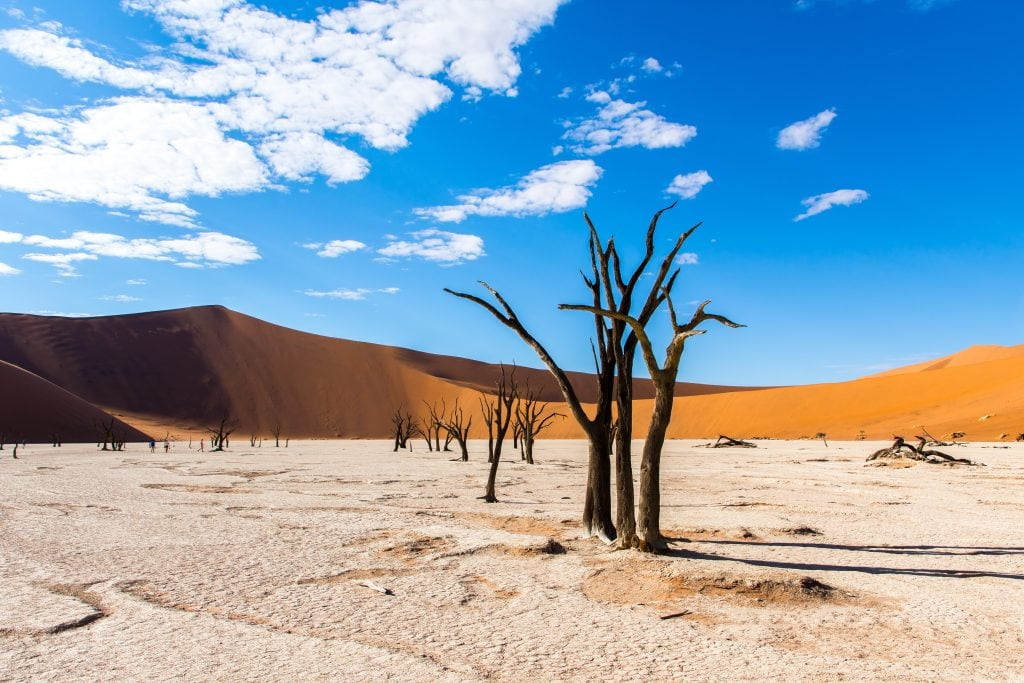 Ancient acacia trees sitting in front of the famous red sand dunes in Deadvlei Namibia.