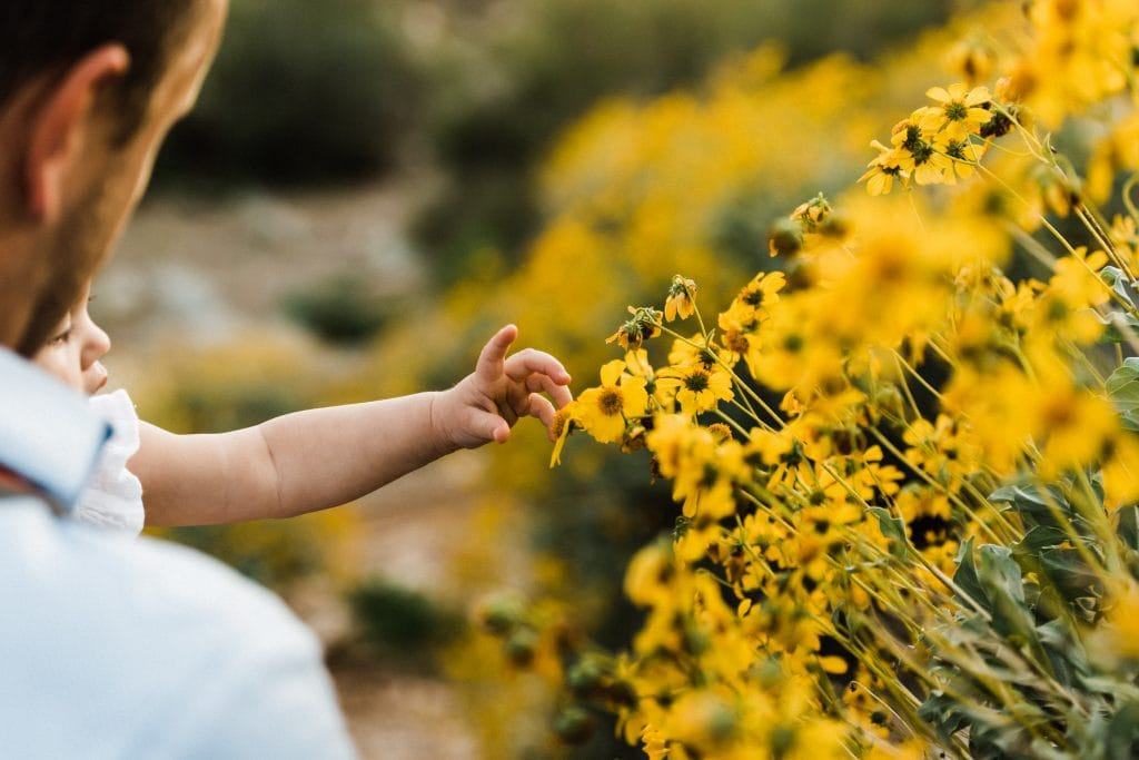Baby touching wildflowers along a hiking trail in the Sonoran Desert in Arizona.
