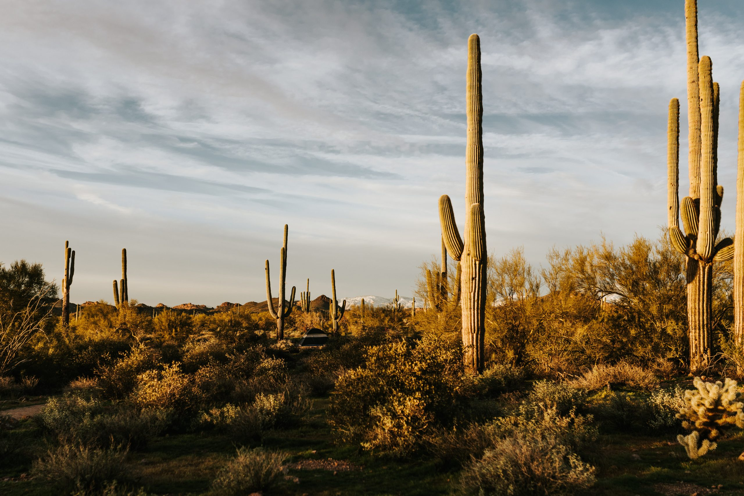 Lost Dutchman State Park at sunset is a perfect kid friendly Arizona elopement location.
